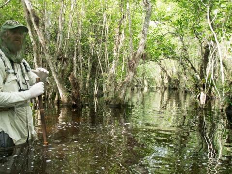 Swamp-walk hero in the Florida Everglades