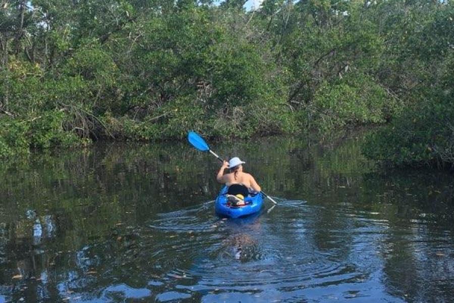 kayak tours dollar bay , naples