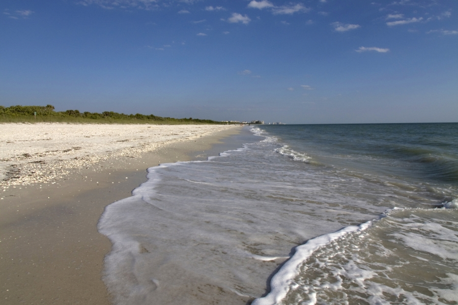 Named One Of America S Top Ten Beaches By Dr Beach Numerous Animal Species Reside In This Natural Setting Including The Land Dwelling Gopher Tortoise And