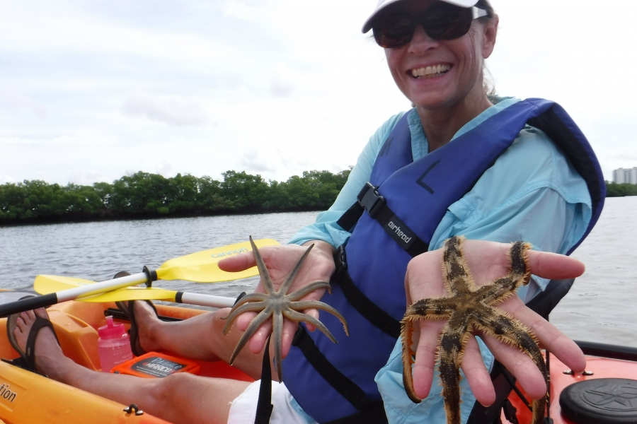 Our explorers discovering multiple species of sea star on our guided kayak excursions!