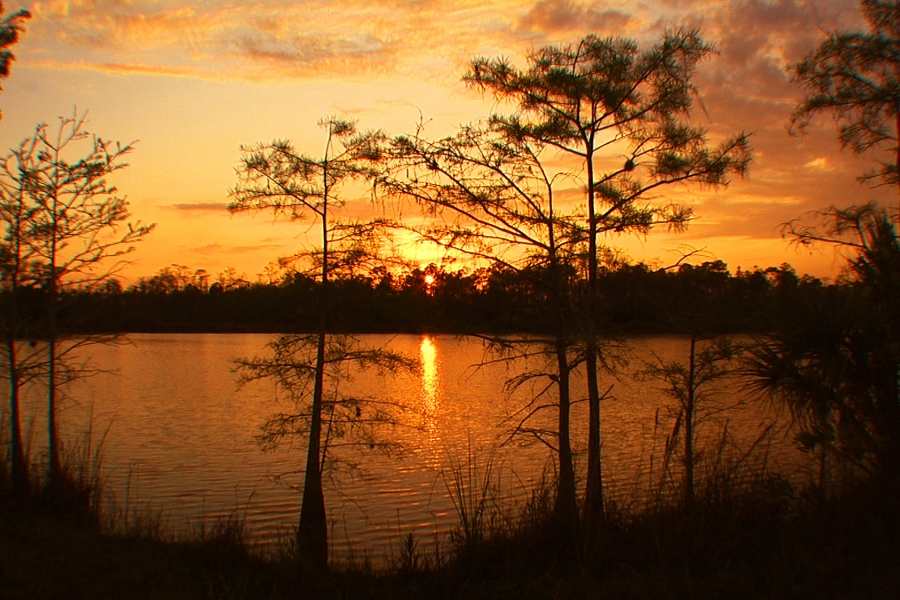 Sunset in the Big Cypress - photo by Elam Stoltzfus