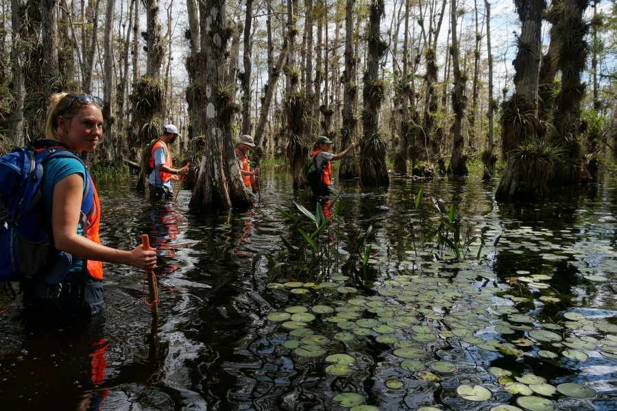 Ranger-led Wet Walks into the cypress swamp