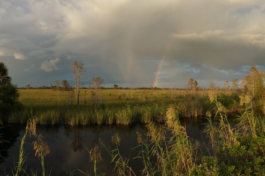 Rainbows over Big Cypress Prairie