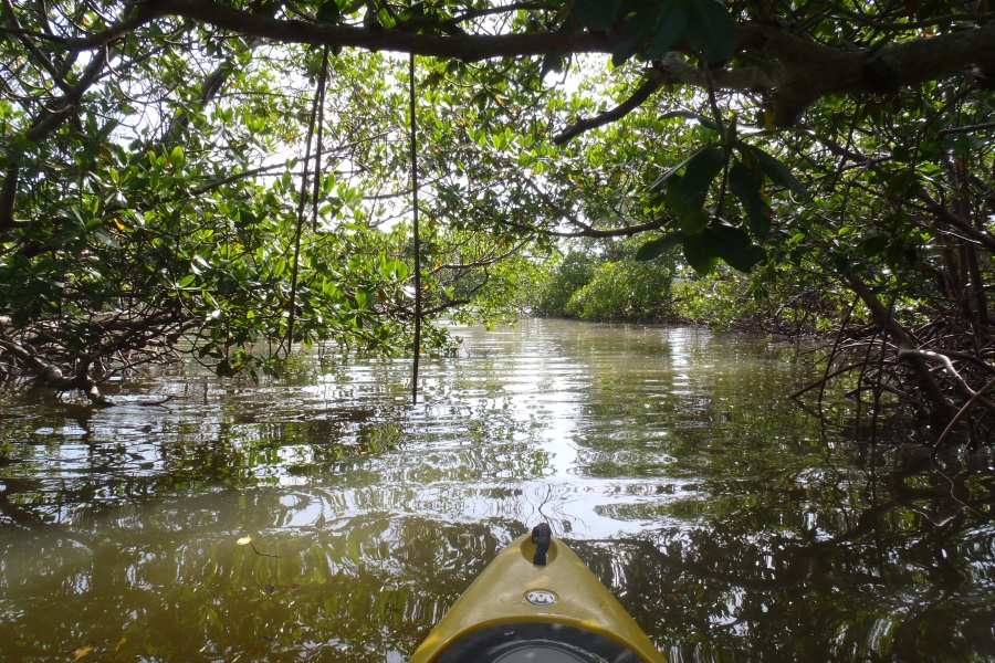 Explore shaded, mysterious mangrove tunnels