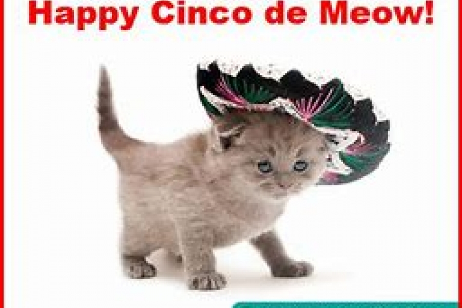 Cinco De Meow At Painting With A Twist Naples Marco Island