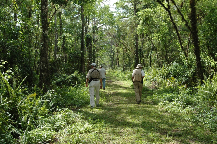 Trail at Bird Rookery Swamp
