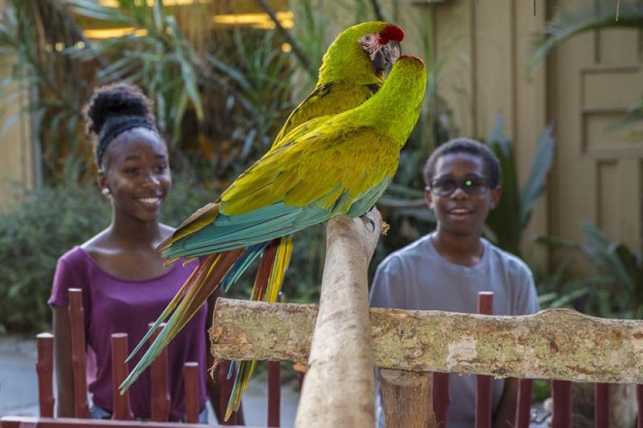 Enjoy up-close experiences at Naples Zoo!