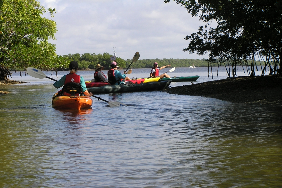 Rookery Bay Reserve offers 2-hour guided kayak trips, a wonderful way to get an upclose view of nature.