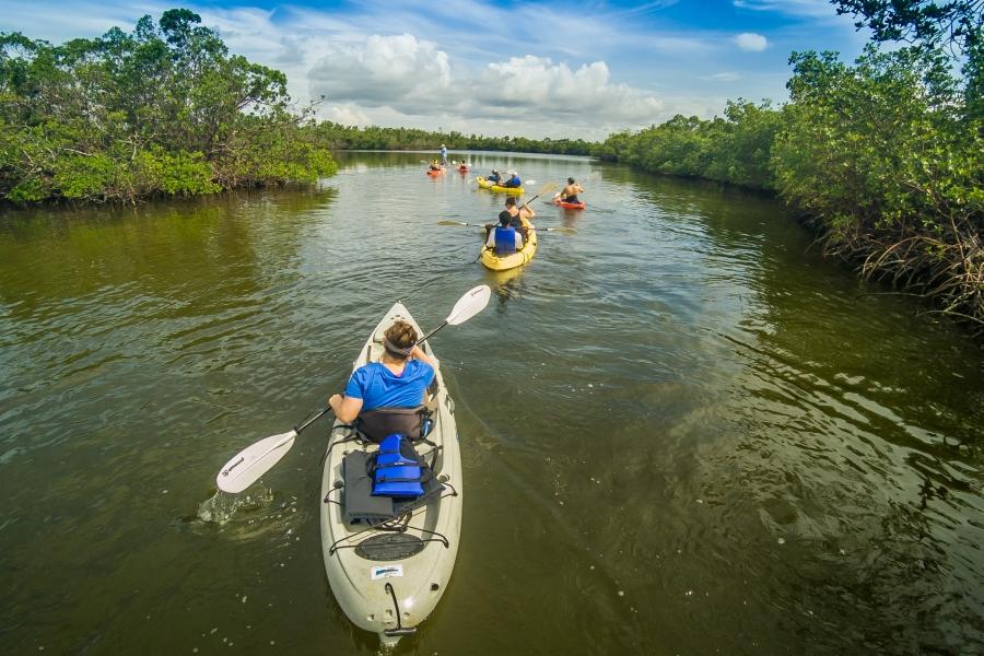 Rookery Bay Guided Kayak Tour