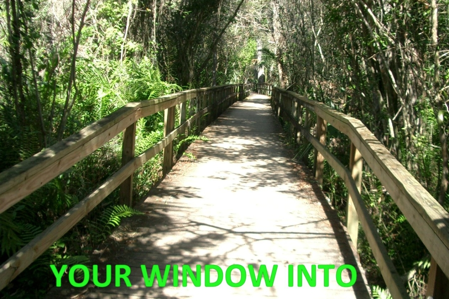 Fakahatchee Boardwalk, your window into the Fakahatchee.