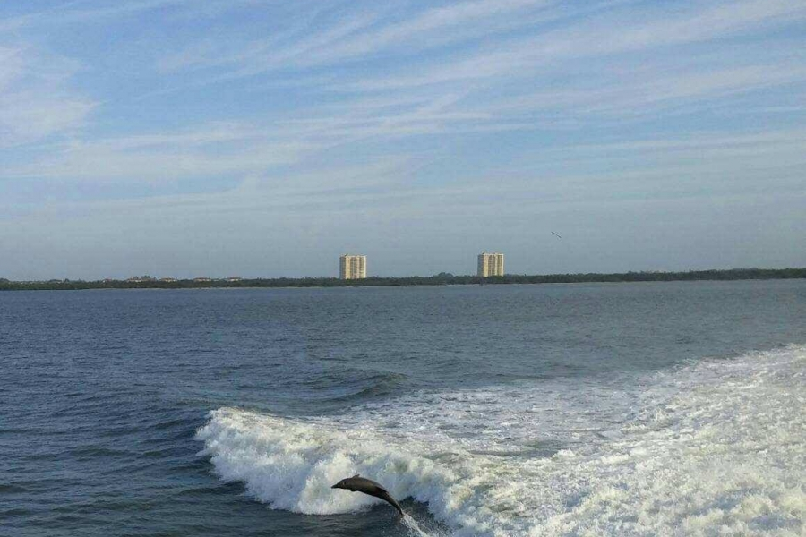 Dolphins behind the boat.