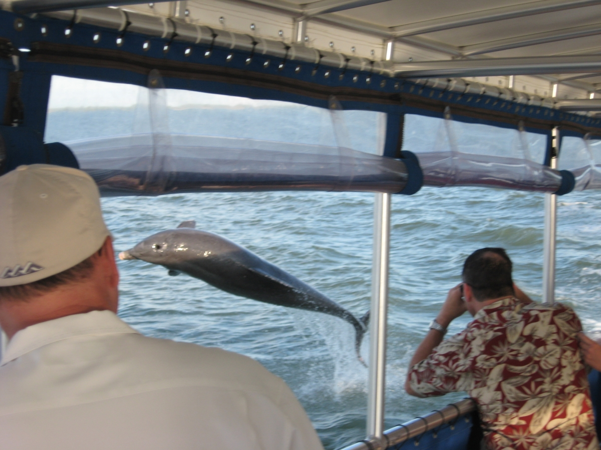 Dolphin jumping next to the Calusa Spirit