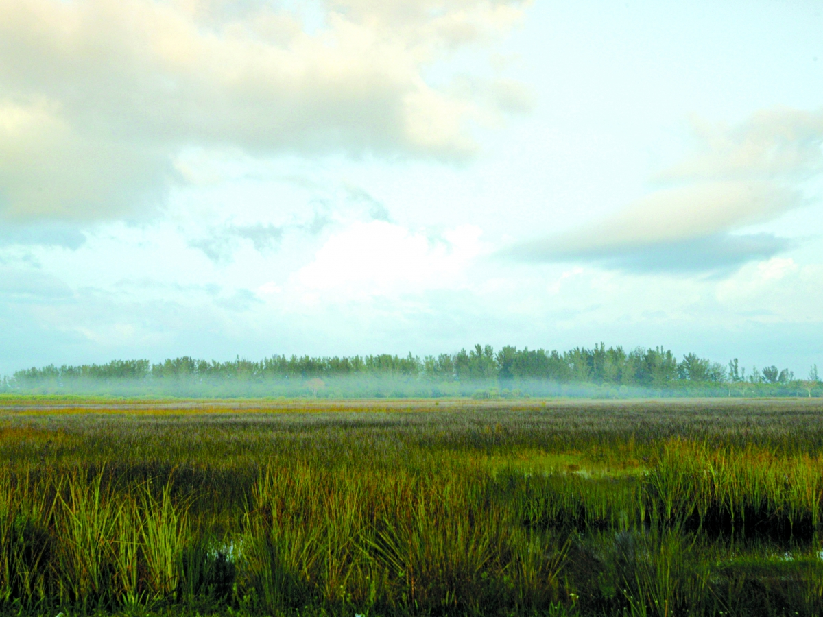 View of the western Everglades from the Tamiami Trail.  Photo courtesy of Naples Marco Island Everglades CVB.