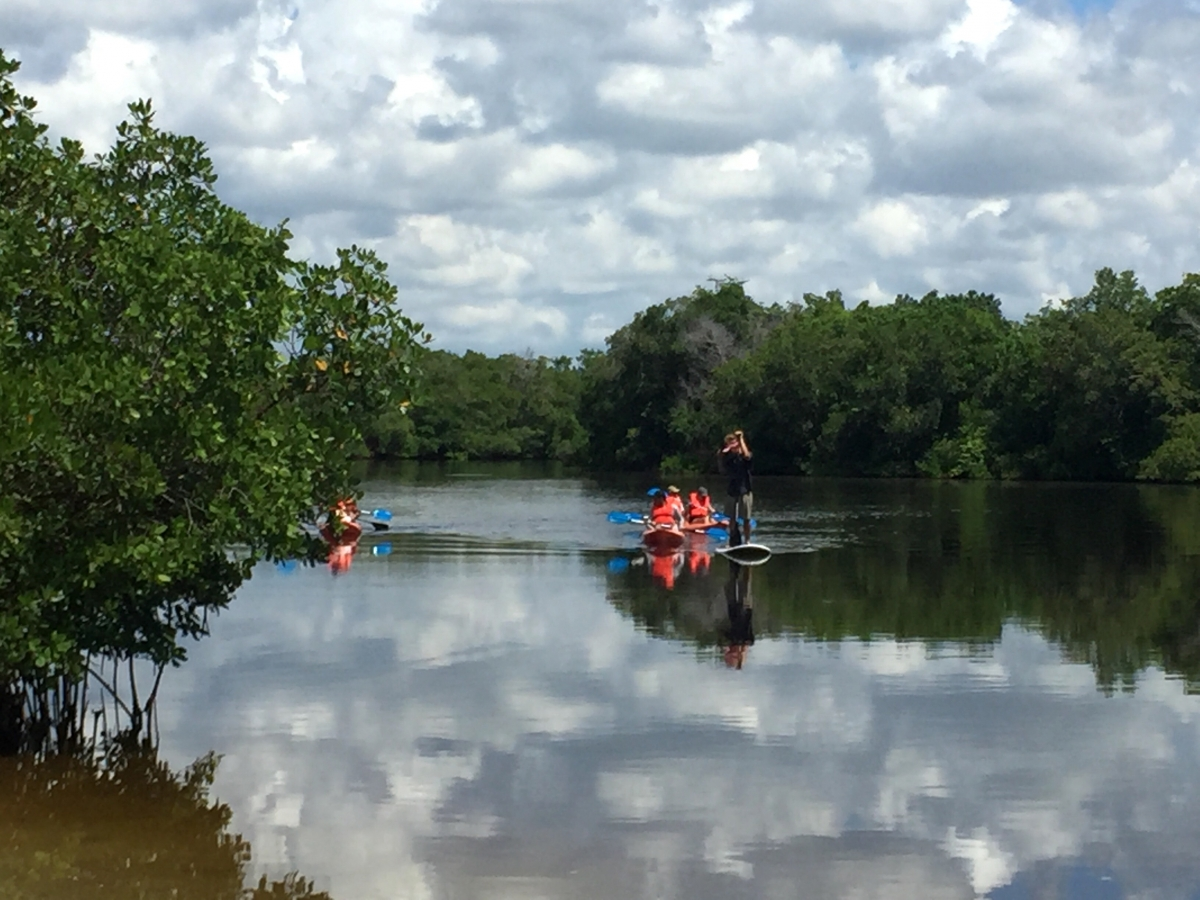 Rookery bay ,Paddleboard and kayak tour