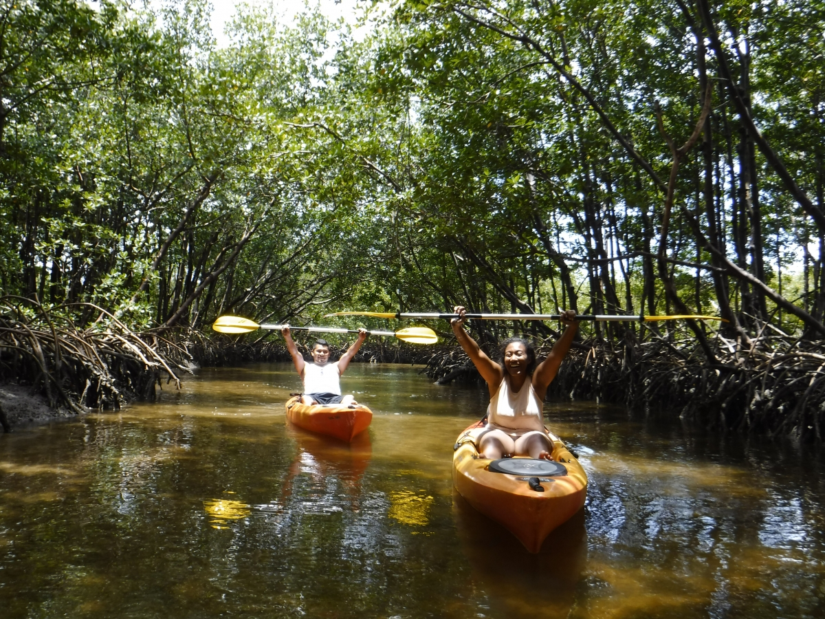 Cruise through hidden mangrove tunnels with Rising Tide Explorers in Naples, Florida!