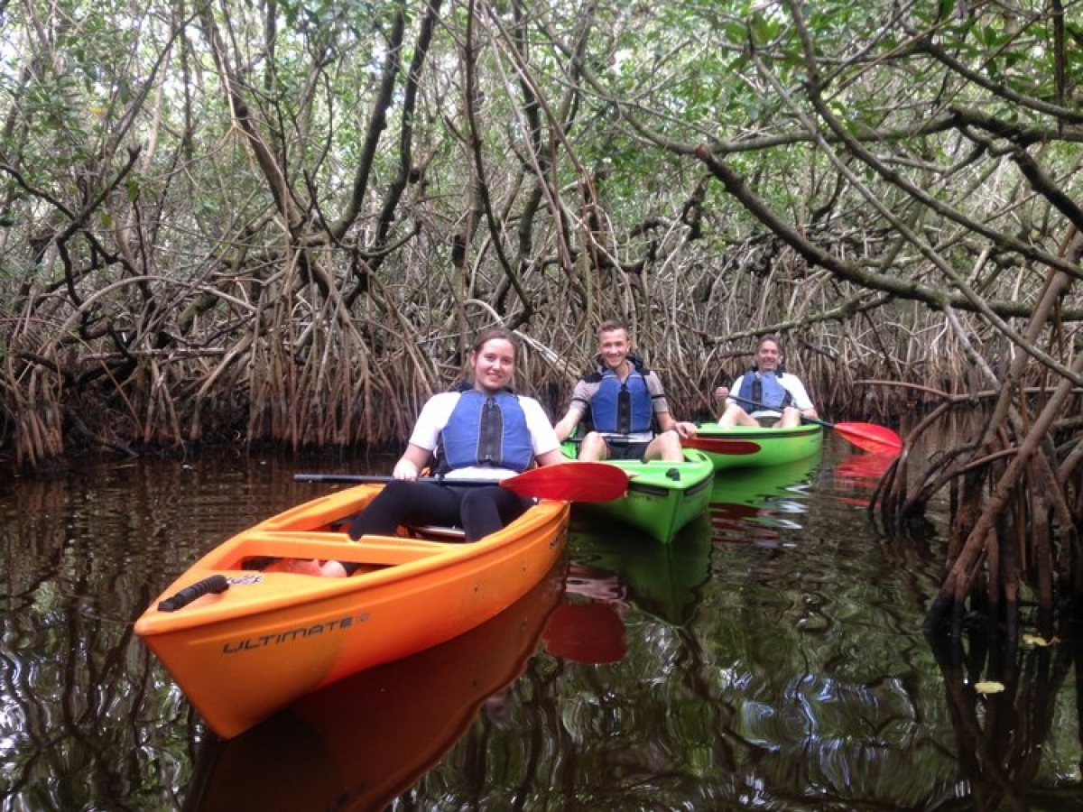Fun in the mangrove tunnels