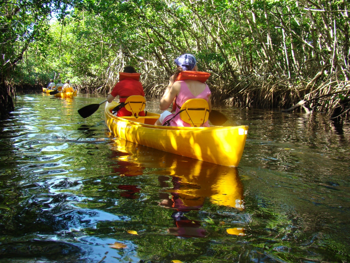 Canoeing down the Blackwater River goes through one of the largest mangrove forests in the world.