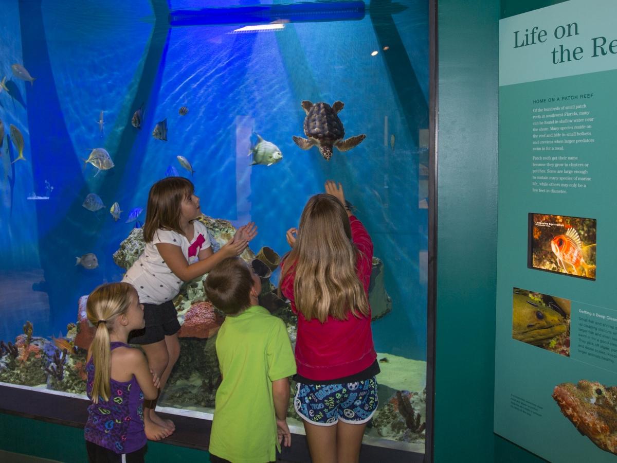 Dalton Discovery Center Patch Reef Tank