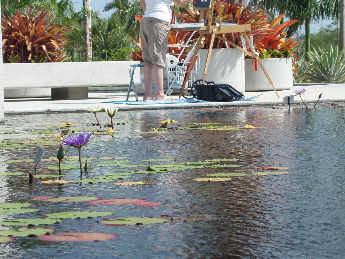 Water lilies in the Brazilian Garden