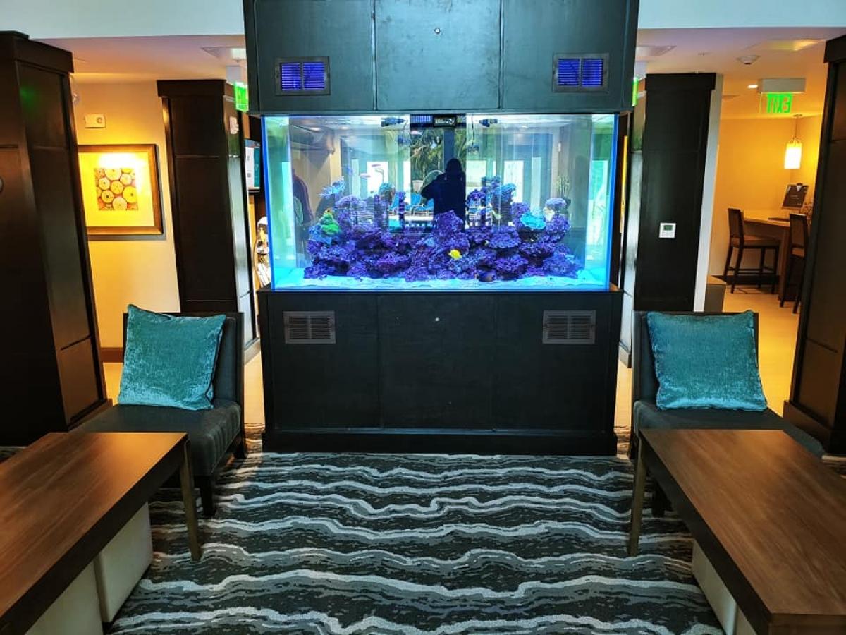 450 gallon saltwater aquarium