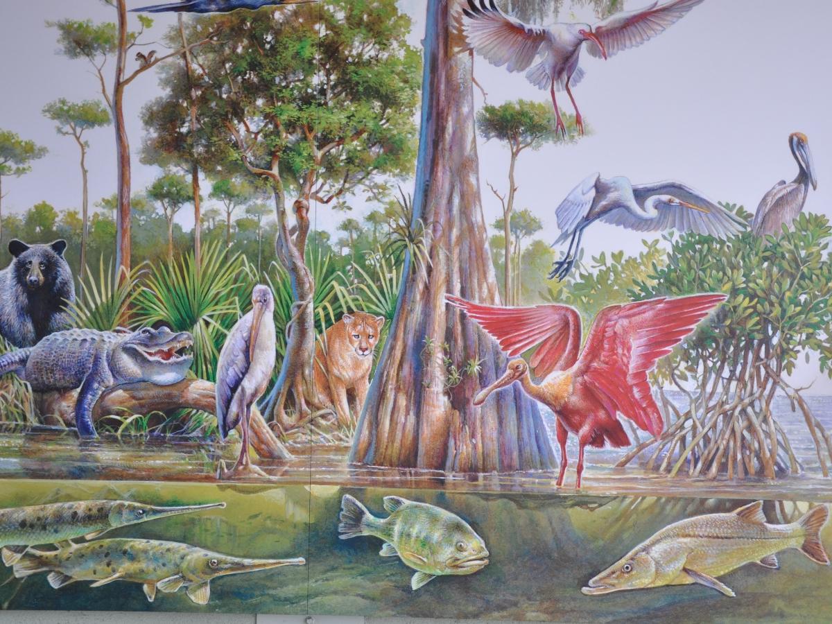 Mural depicting the natural wonders of the Big Cypress Swamp