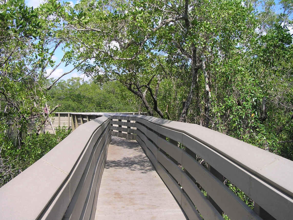 The walking trails at the Rookery Bay Environmental Learning Center include observation platforms over Henderson Creek.