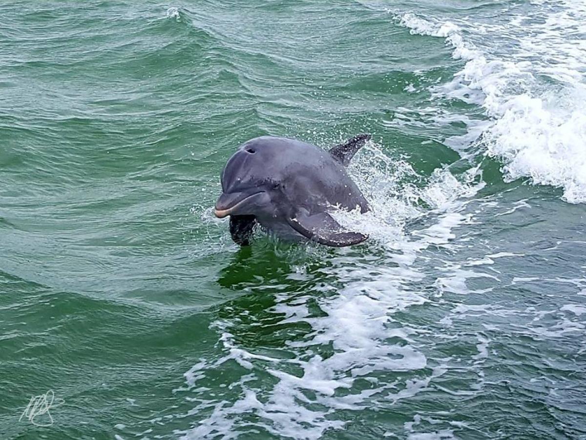 Hemingway Water Shuttle - Dolphin Watching