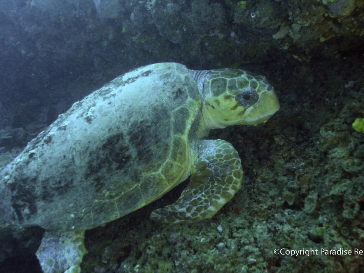 Ledges between Foote Reef & Rooney Reef's