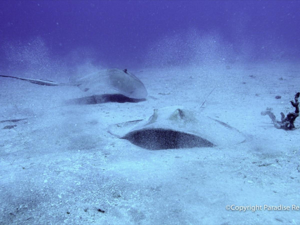 NE Rooney Reef